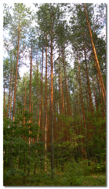 Thick Wooded Forest